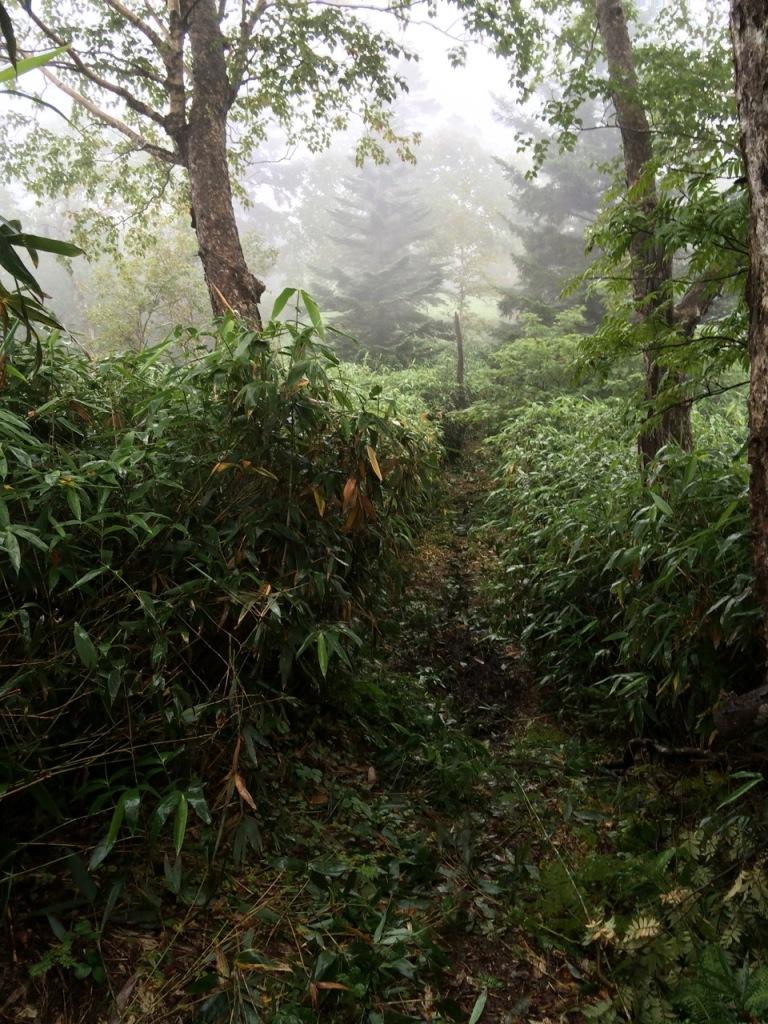 延々と続く笹と泥のトレイル