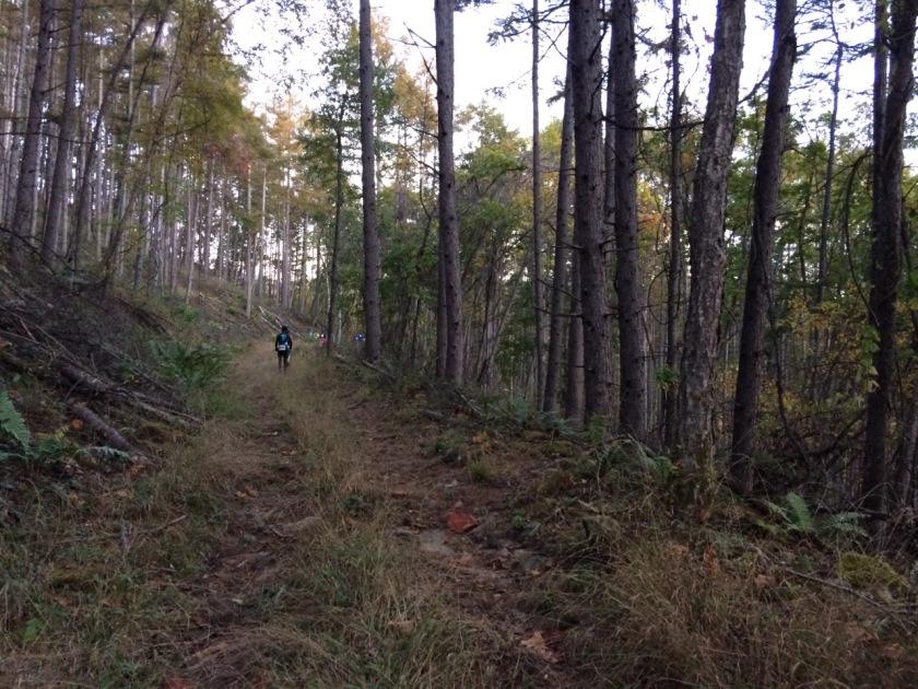 林道の登り。ほぼトレイルと化している。