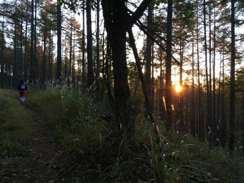 最初の林道で朝日に照らされる